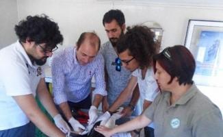 Aydın'da 6 leylek ve bir kızıl şahin doğaya salındı