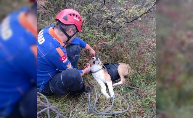 Kayalıklarda mahsur kalan köpeğe AFAD şefkati