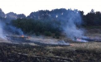 Şaphane'de orman yangını