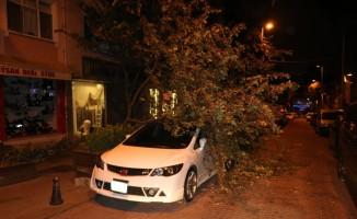 Şiddetli rüzgar ağacı lüks otomobilin üstüne devirdi