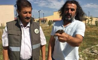 Tedavisi tamamlamam Boyunçeviren kuş yaşam alanına bırakıldı