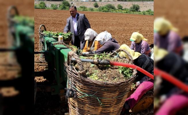 """Baştuğ; """"Kadın çiftçilerimiz ülke kalkınmasının lokomotifi"""""""