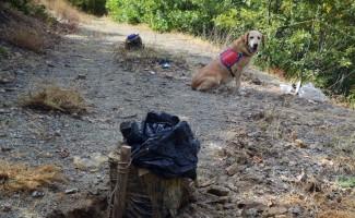 Bingöl'de 2'si tuzaklanmış toplam 340 kilo patlayıcı ele geçirildi