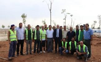 Haliliye'de 158 bin ağaç toprakla buluşturuldu