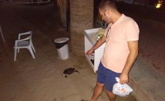 Kuşadası sahilde ölü caretta caretta bulundu