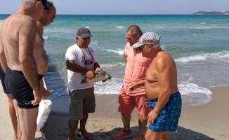 Kuşadası sahiline iki deniz kaplumbağası vurdu