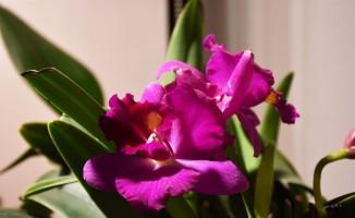 Marmaris'in orkideleri ile biyoçeşitliliğe dikkat çekilecek