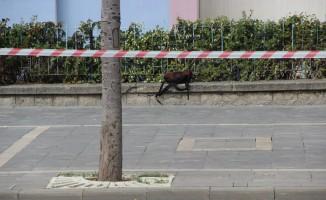 Okul çantası bomba paniğine neden oldu