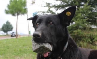 (Özel Haber)Yavrularını kaybeden köpek, ağzındaki taşı yavrusu sanıyor