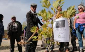Sanatçı köyünde Ara Güler için çınar ağacı