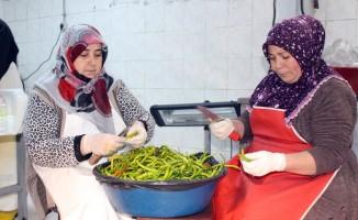 Ağrılı kadınlar günde 1,5 ton turşu üretiyor