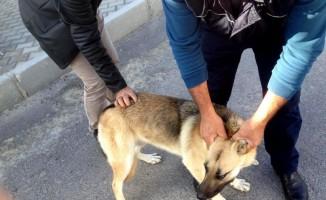 Çeşme'de sokak hayvanları kısırlaştırılıyor