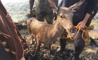 Denizden itfaiyenin kurtardığı geyik telef oldu