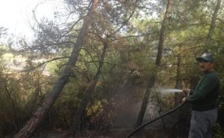 Nurdağı'nda orman yangını