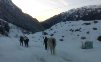 Rize'de yaylada terk edilen 2 at donmak üzereyken kurtarıldı