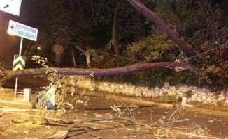 Sarıyer'de tünel girişine ağaç devrildi, yol trafiğe kapandı
