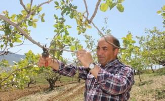 Siirtli çiftçilere budama ve gübreleme eğitimi verilecek