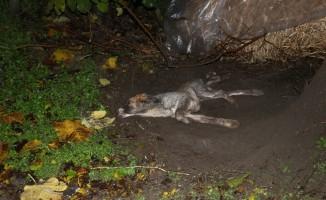 Can çekişen köpek için mahalleli seferber oldu