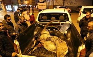 Dağ keçisini vuran 2 kişiye gözaltı