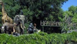 Suriye'deki hayvanat bahçelerinden Türkiye'ye transfer