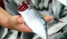 Balık fiyatlarının yüzde 60 ucuzlaması bekleniyor