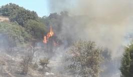 Reklam tabelası dikmek isterken ormanı yaktılar