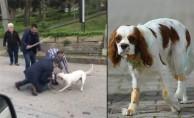 Bursa'da pitbull dehşeti! Sahibiyle gezen köpeğe...