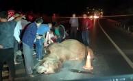 Yola çıkan deveye otomobil çarptı! 4 yaralı