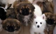 Yurda kaçak getirilen köpekler ihaleyle satılacak