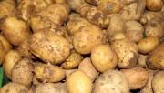 Patates ve soğan fiyatlarına takip