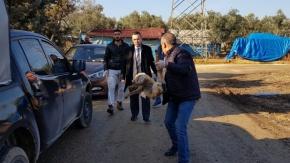 Bursa'da kuyruğunu kestikleri yavru tilkiyi ayaklarından astılar
