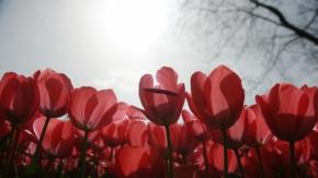 Bahar Bursa'ya geldi