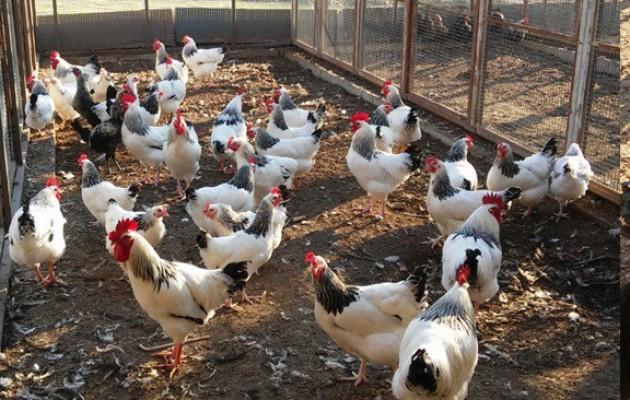 Uludağ Üniversitesinde  organik üretim