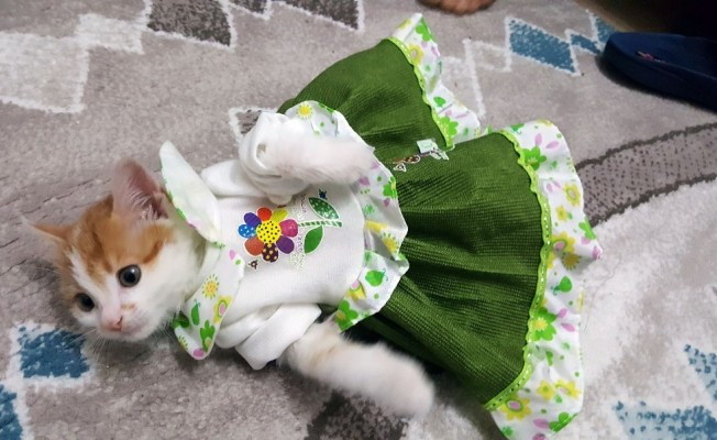 Sevimli kedi ilgi odağı oldu