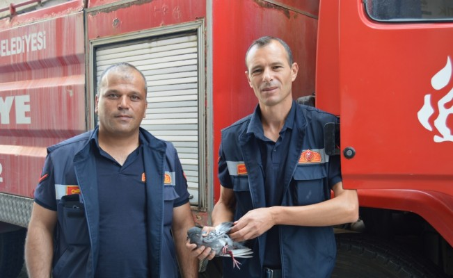 Afyonkarahisar'da itfaiyeden güvercin kurtarma operasyonu