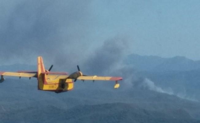 Kaza yapan araç 20 hektar ormanı kül etti