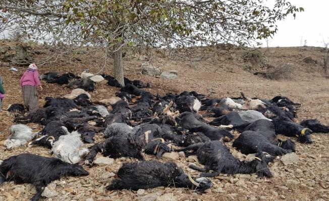 Adana'da yıldırım isabet eden 81 keçi telef oldu