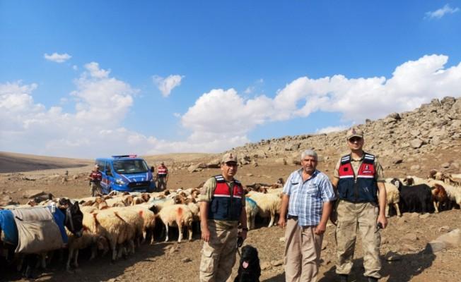 Kaybolan koyun sürüsü İHA desteğiyle bulundu