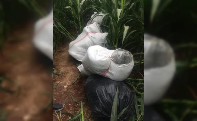 Şanlıurfa'da 172 kilo esrar maddesi ele geçirildi