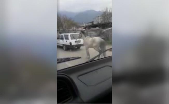 Bursa'da vicdansız sürücü atını aracının arkasına bağlayıp ana yolda koşturdu