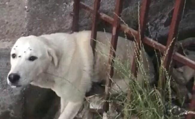 Demir korkuluklara sıkışan köpeği itfaiye ekipleri kurtardı