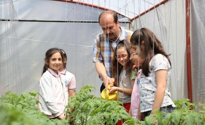 Öğrenciler, okullarındaki seralarda çiftçi oldu