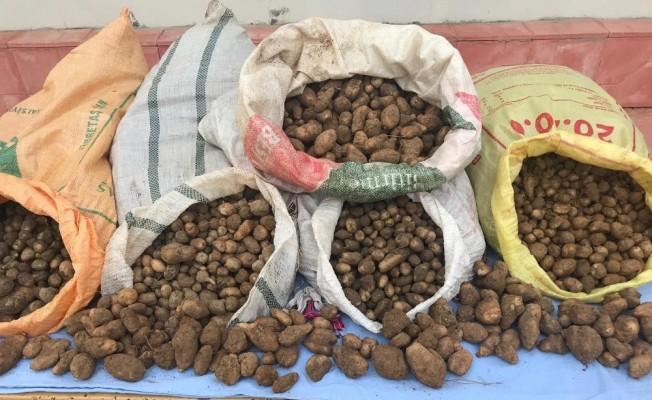 Salep soğanı toplayanlara bugün de 240 bin TL ceza kesildi