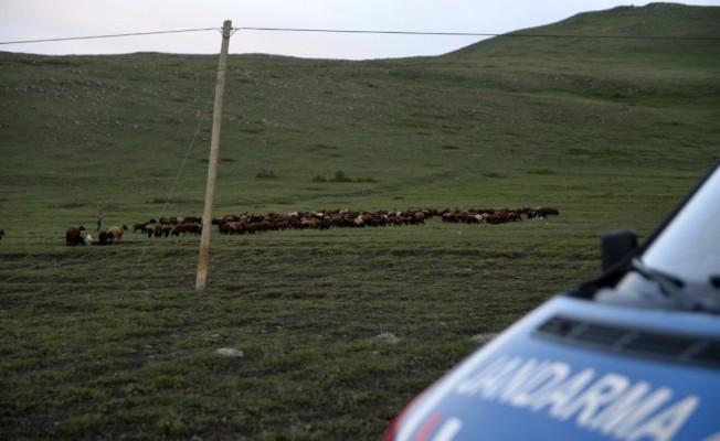 800 küçük baş hayvan yakalandı