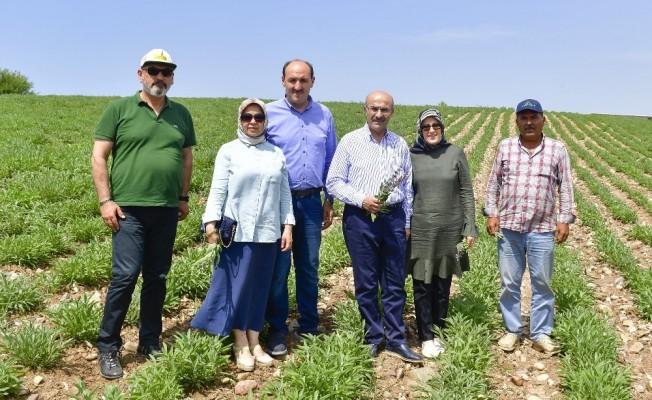 Adana'da tarımsal ürün çeşitliliği artıyor