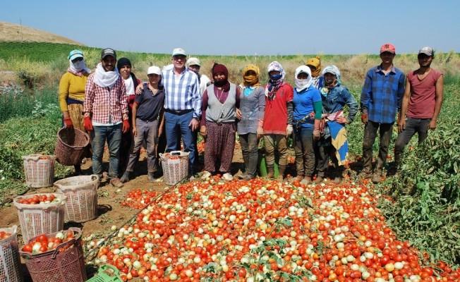 Salçalık domateste üretim arttı