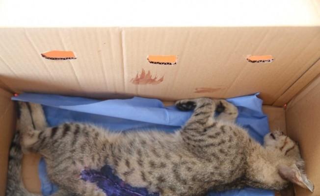 Yaralı kedi tedavi altına alındı