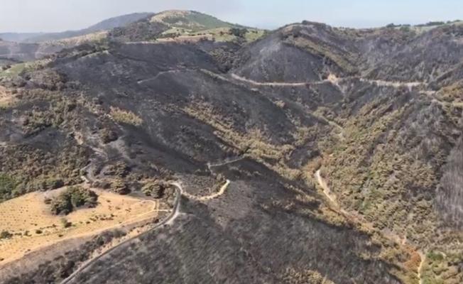İzmir'in ormanlarında yürekleri sızlatan acı bilançonun detayları