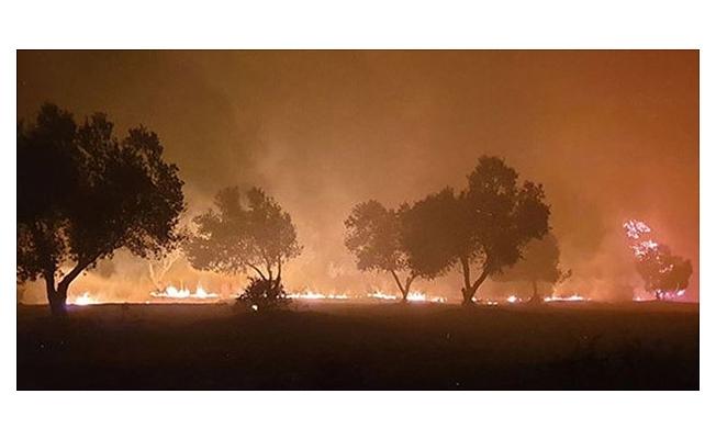 Türkiye'nin ciğerleri yandı! Tam 27 noktada orman yangını