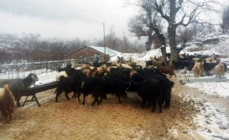 Antalya'da karda mahsur kalan 2 çoban ve sürüsü kurtarıldı
